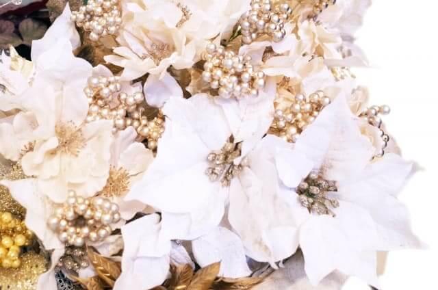 ポインセチア 英語 花言葉