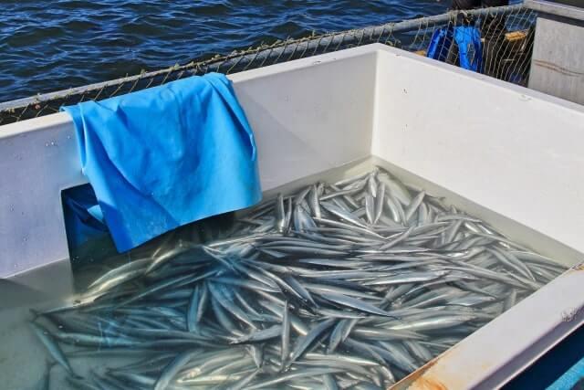 秋刀魚 不漁続き 原因