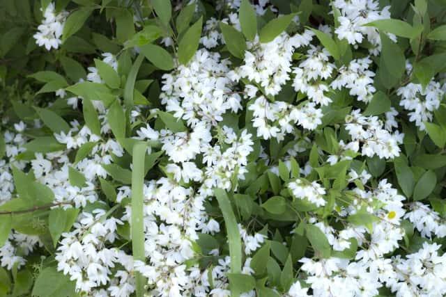 おから 卯の花 別名 雪花菜
