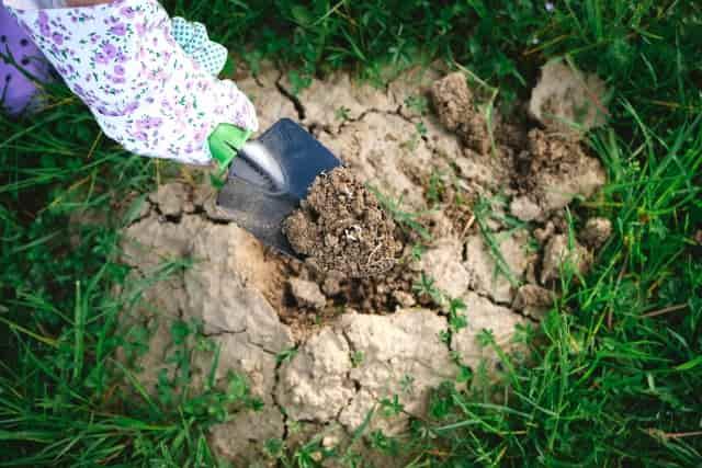お盆 なす きゅうり 処分 庭に埋める