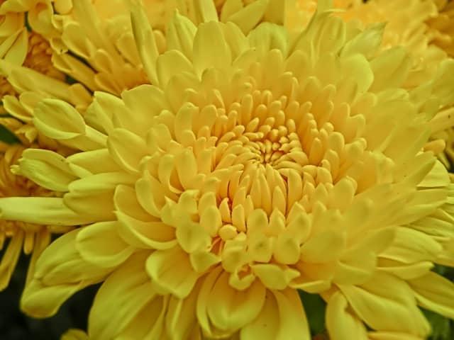重陽の節句 食べ物 菊